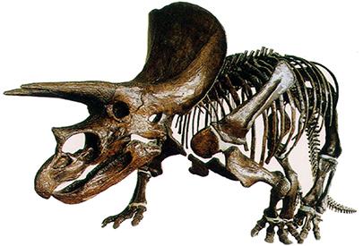 I què en fem d'un fòssil?