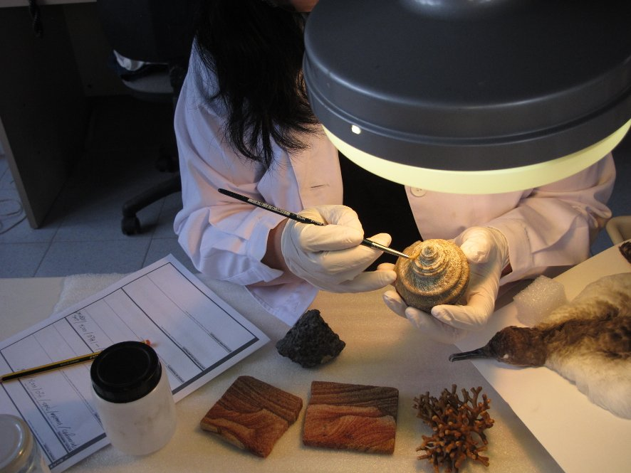 Fes de restaurador per un dia al Museu de Ciències Naturals de Barcelona.