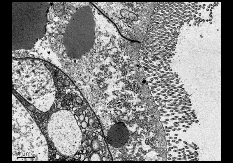 La Vida a través del Microscopi