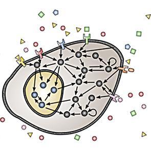 Visita al PRBB: recerca en el Laboratori de Dinàmica de Sistemes Biològics i biologia sintètica