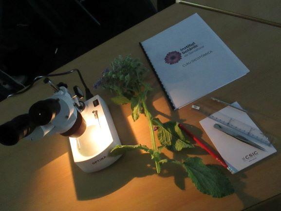Sigues botànic per un dia, taller d'identificació de plantes