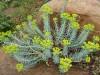 Com evolucionen les plantes