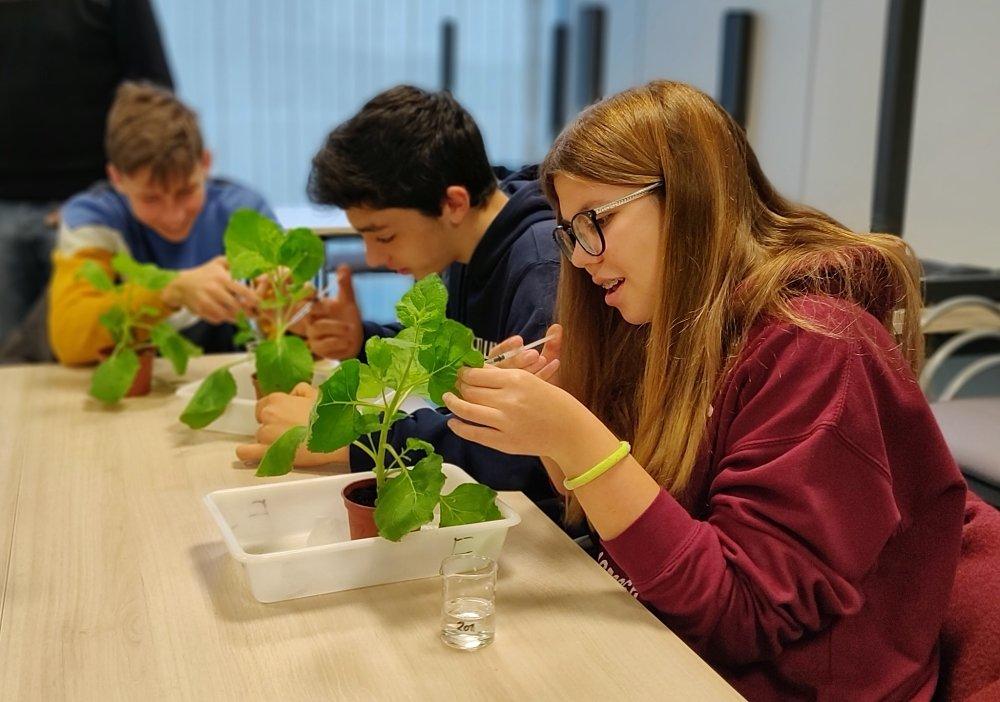 Els virus de plantes: aliats o enemics?
